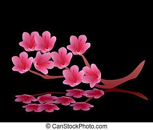 knoppen, roze, bloeiend, bloesems, kers