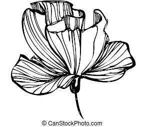knoppen, schets, bloem, witte achtergrond
