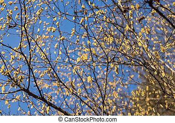 kočička, větvit, zbabělý, strom