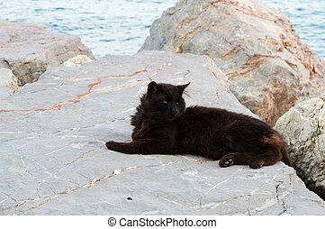 kočka, čerň, ležící, led