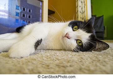 kočka, ležící, dno