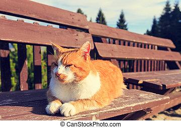 kočka, ležící, pobídka, lavice