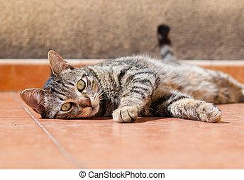 kočka, ležící, terasa