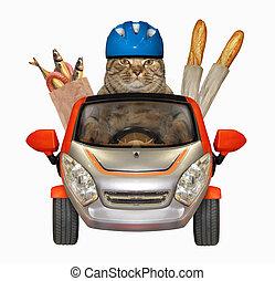 kočka, s, strava, od vagón
