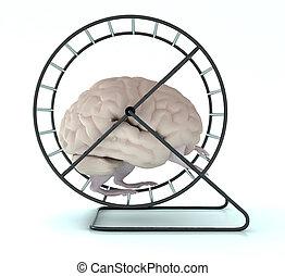 koło, herb, mózg, chomik, ludzki, nogi
