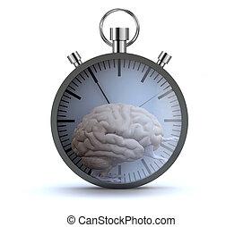 koło, organy, herb, mózg, wyścigi, chomik, ludzki, stoper, nogi