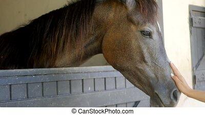 koń, babski, pieści, ręka