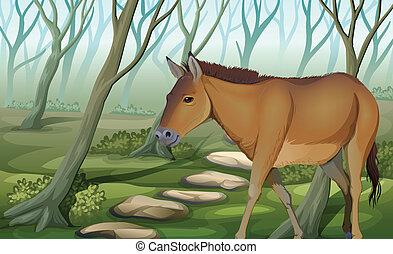koń, las
