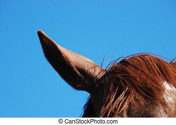 koń, ucho
