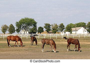 koń, zagroda