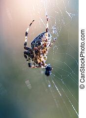 kořist, min.čas i příč.min. od catch, pavouk pavučina