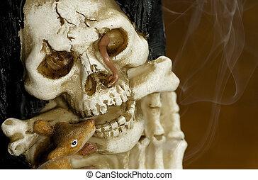 kość, czaszka