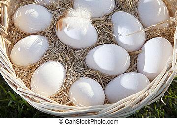 koš, proutěný, vejce