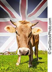 ko, hos, flag, baggrund, series, -, great britain