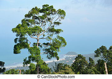 ko samui view point sea view and forrest.