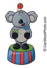 Koala circus acrobat