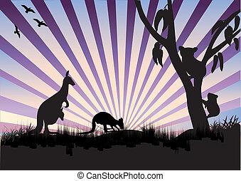 koala, e, canguru, em, ocaso roxo