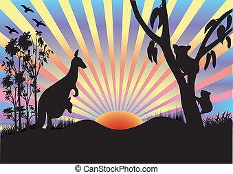 koala, e, canguru, em, pôr do sol
