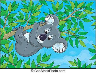Koala - Grey koala bear hanging on an eucalyptus branch,...