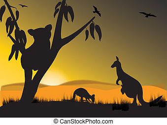 koala kangaroo - koala and kangaroo in the sunset