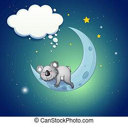 koala, oben, bär, mond