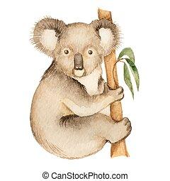 Koala, watercolor vector illustration isolated on white...