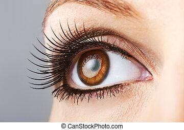 kobieta, brązowy, oko, z, fałszywy, bicze