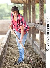 kobieta, czyszczenie, zwierzę, ogrodzenie