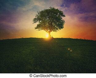 kobieta, drzewo., czytanie, przeciw
