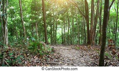 kobieta, młody, samui., koh, stosowność, dżungla, wyścigi, las