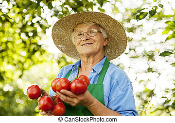 kobieta, senior, pomidory