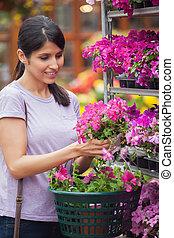 kobieta, wybierając, różowy kwiat, w, ogrodowy środek