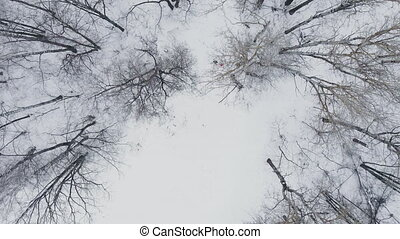 kobieta, zima, wyścigi, drewna, przez, czas, aerial:, człowiek