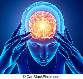 kobiety, czuły, ból głowy