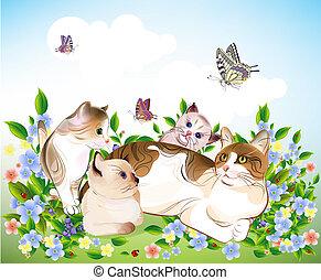 kociątka, family., kot, meadow., szczęśliwy, ?ats