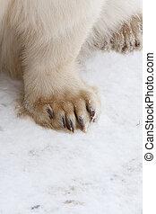 koenig, arktisch, bär,  Polar