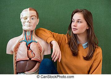 koerper, class., schule, weiblicher student, concept., biologie, künstlich, hoch, model., menschliche , spaß, porträt, bildung, haben, kühl