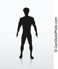 koerper, silhouette, menschliche , abbildung