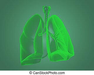 koerperbau, röntgenaufnahme, lungen