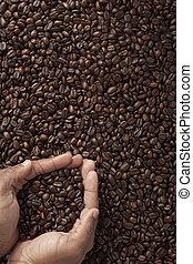 koffie bonen, in, cupped, menselijke handen