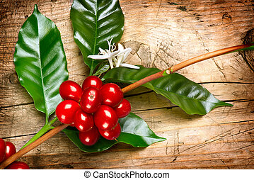 koffie boom, bonen, tak, plant., rood