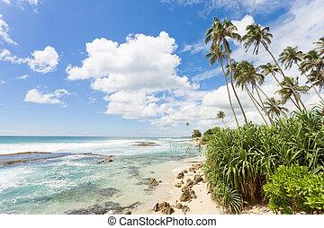 koggala, praia, sri lanka, -, sentimento, livre, enquanto, relaxante, em, a, beatiful, paisagem, de, koggala, praia