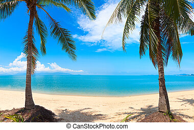 koh, καρίδα , τροπικός , πανοραματικός , πάταγος , σιάμ , palm., παραλία , po , samui