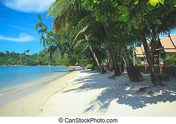 koh, bungalow, albero, tropicale, palma, lusso, chang, spiaggia