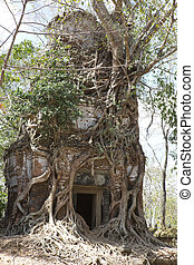 koh, chrap, mietere, prasat, albero, tempio, distrutto, cambogia, siem, complesso, coperto, ker, radici