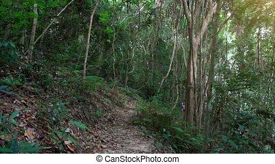 koh, femme, jeune, courant, jungle, fitness, hd., samui., 1920x1080, forêt