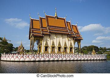 koh, isola, buddista, thailand., tempio, samui