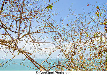 koh, isola, ranong, tropicale, tailandia, payam, spiaggia