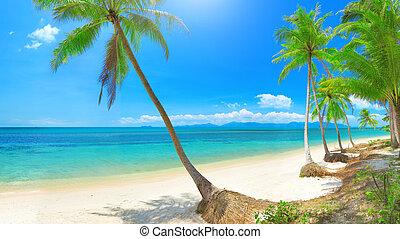 koh, orzech kokosowy, tropikalny, panoramiczny, tajlandia, palm., plaża, samui
