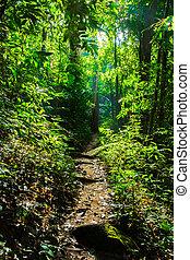 koh samui, 大きいアイランド, 木, rainforest, タイ